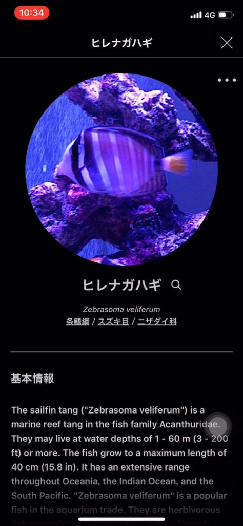 魚の詳細情報