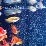 水族館×カフェ×AI図鑑アプリ?!「ジュエリーアクアリウム」で、暑い夏に癒しのひとときを【期間限定】