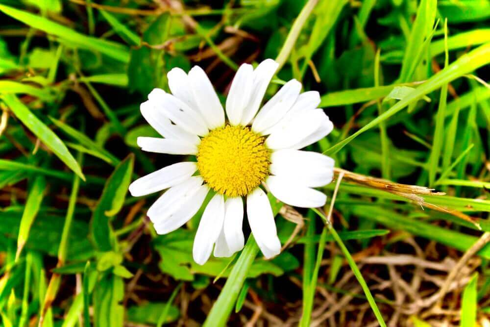 花、優しいイメージ
