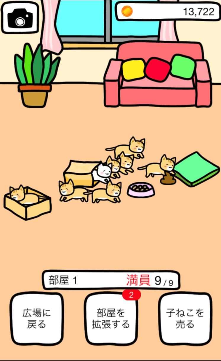 子猫が増えてる