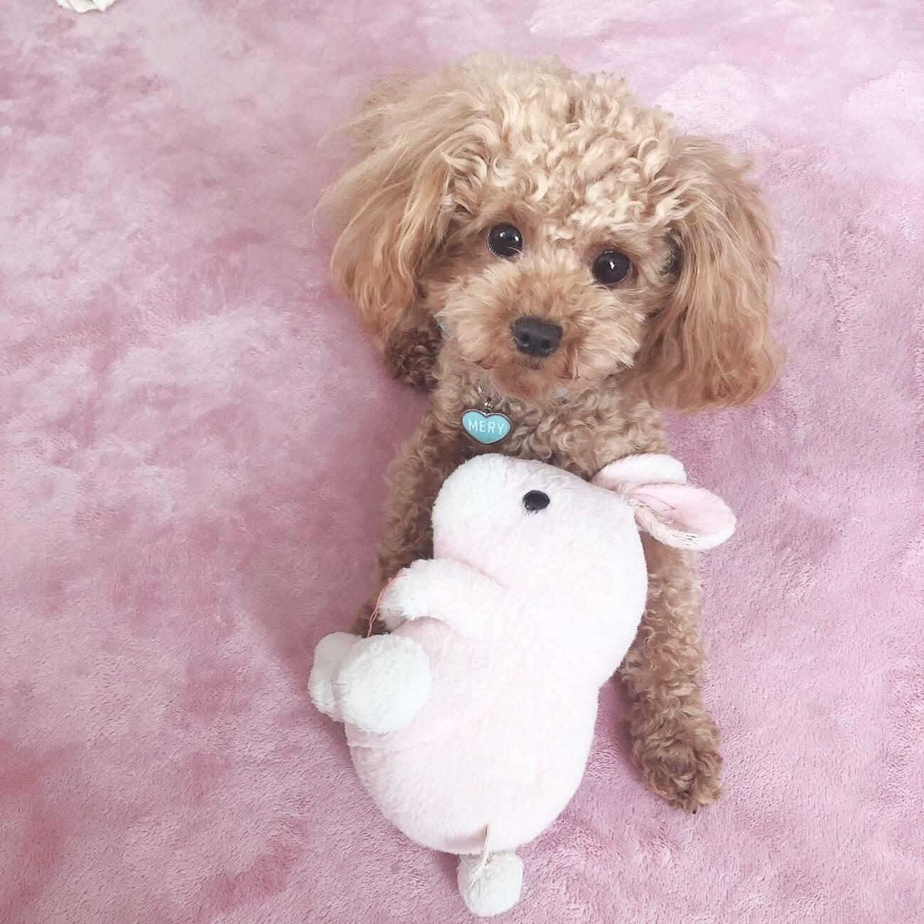 愛犬とうざきのぬいぐるみ